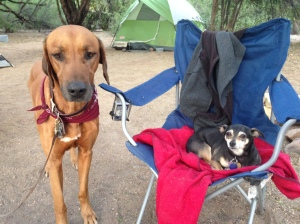 Shorty camping with her cousin Helo in Arizona in Tonto National Forest