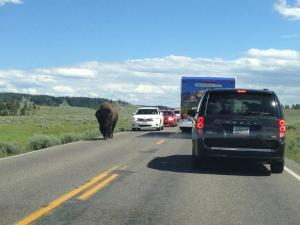 Yellowstone is great for finding license plates because people visit from all over the country/world and bison like to use the roads as trails, meaning you will spend a lot of time looking at the cars in front of you