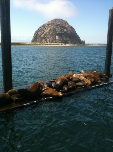 Scenic Morro Bay with its abundant wildlife can be reached by Route 1