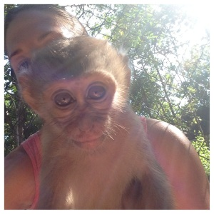 Macaques seem to enjoy selfies, but don't expect to show up in the picture yourself!