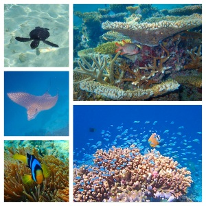 Each day is like snorkeling in a better aquarium than the day before